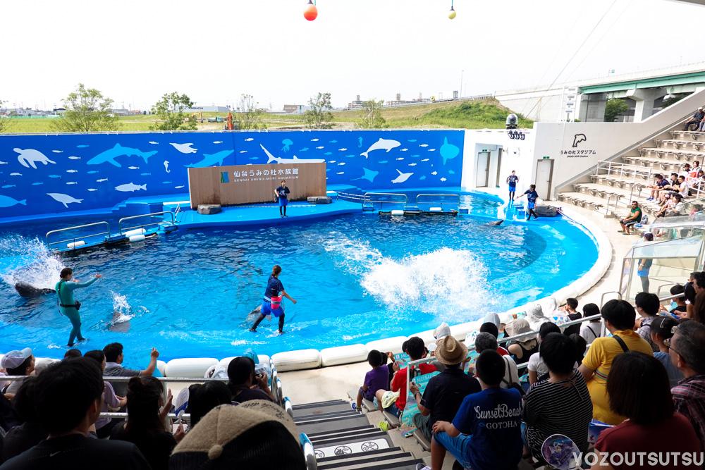 イルカの恣意的な水しぶき
