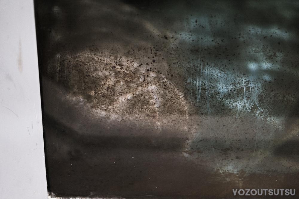 オオサンショウウオの水槽