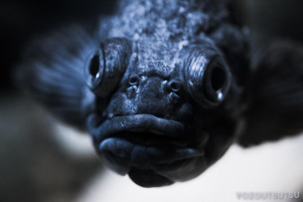 ゴマソイっぽい魚?